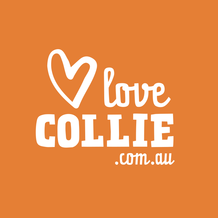 Love Collie-sq